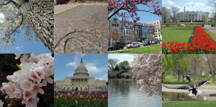 Washington D.C. in spring